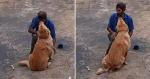 Reação de cachorro ao ver pedreiro pela primeira vez é FOFA demais!