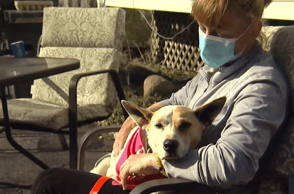 Mulher encontra sua cadela que estava perdida há 5 anos