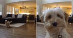 Dono instala câmera e ao chamar sua cadela, acaba vendo isso!