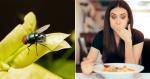 Mosca na comida: posso COMER ou devo JOGAR fora?