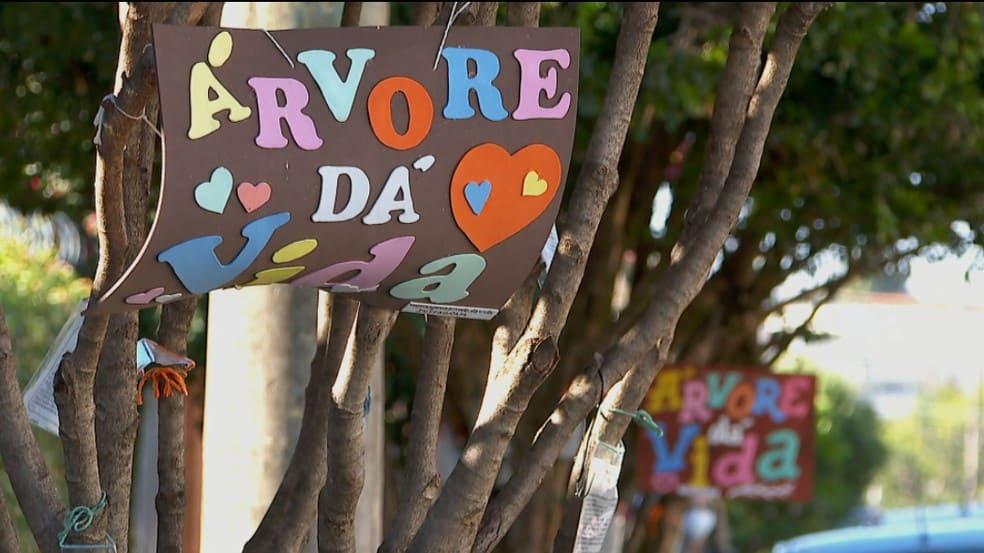 Mulheres criam projeto em árvores para espalhar esperança