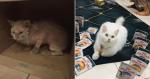Mulher resgata gata e mudança da felina é IMPRESSIONANTE