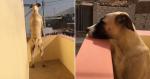 EMOCIONANTE: Cachorro passa o dia todo esperando dono chegar
