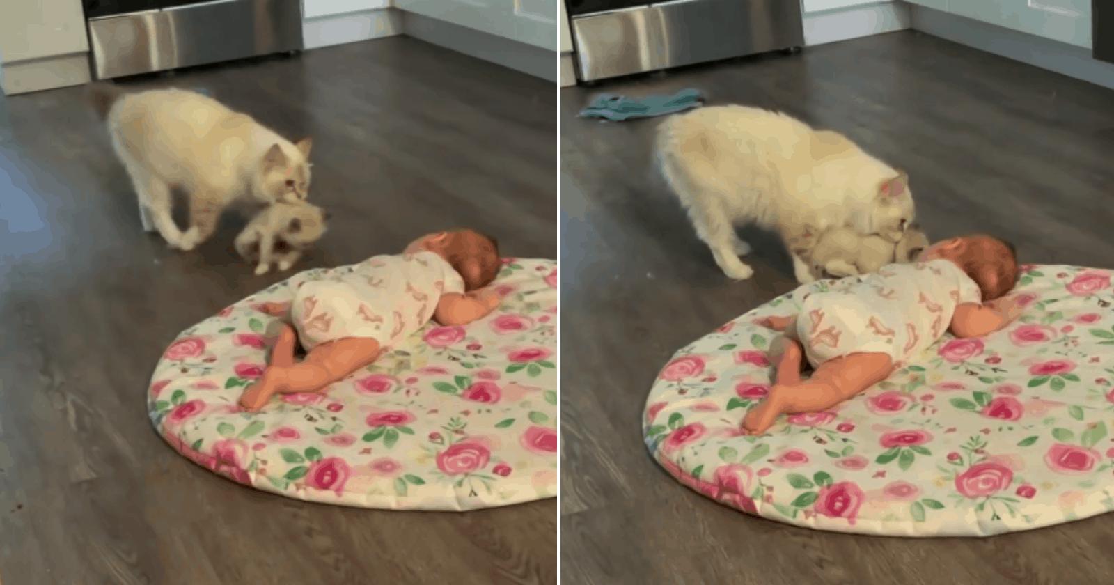 Gata carrega filhote para mostrá-lo ao bebê da família