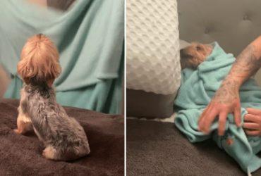 Cachorro se joga para dono o 'embalar' para dormir