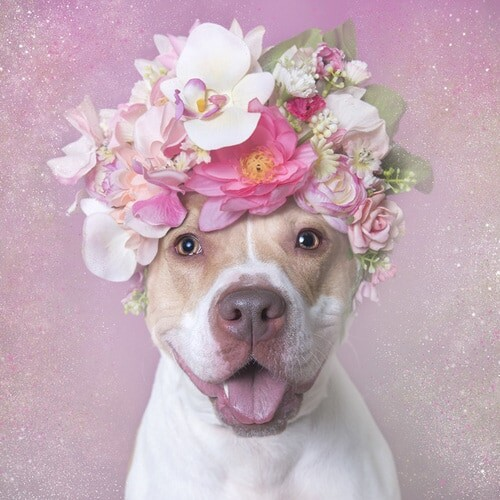 Fotógrafa cria projeto fofo para quebrar preconceitos com Pitbulls