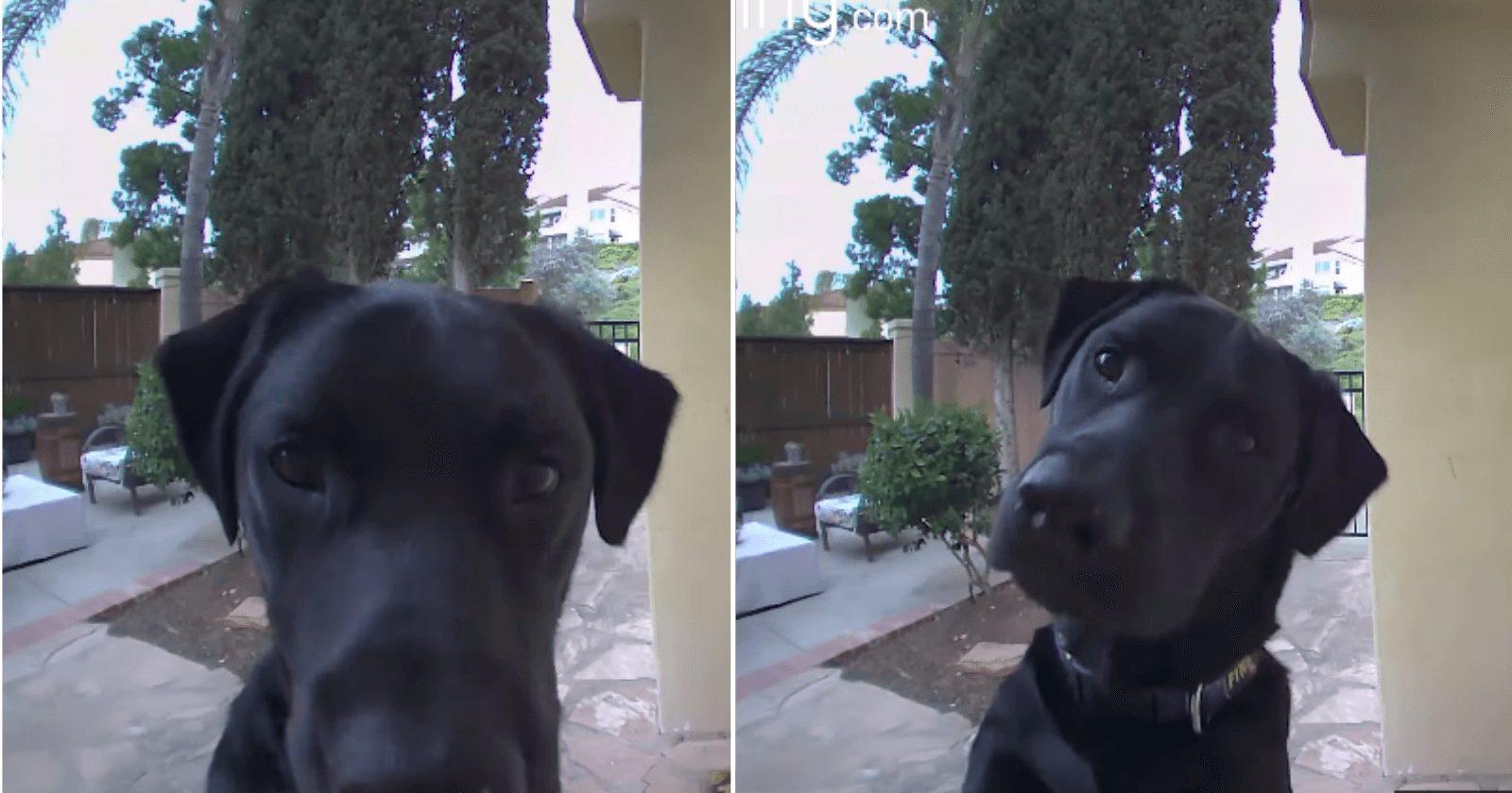 Dona chama cachorro pela câmera e reação confusa dele é fofa