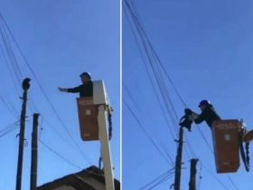 Funcionários de companhia elétrica resgatam gato preso em poste