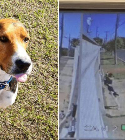 Cachorro assusta família ao aprender a tocar campainha