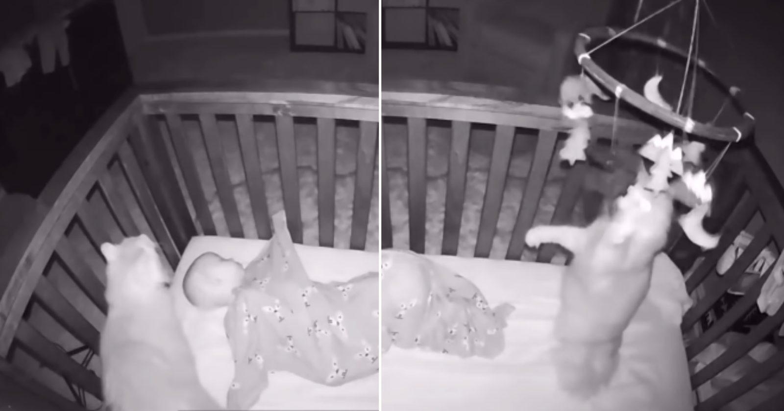 Gato entra em berço, cheira bebê e faz algo super inusitado