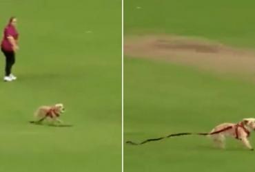 Cachorro invade campo e rouba bola de jogadores