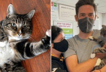 10 anos depois, donos reencontram gatinho desaparecido