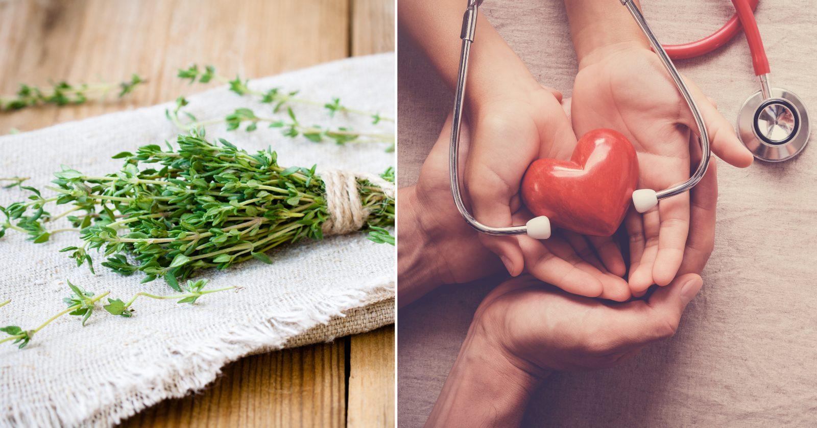 33 plantas MEDICINAIS poderosas para se ter sempre por perto