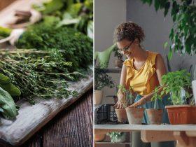 9 ervas que te ajudarão a DESCARREGAR as más energias