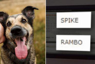 Tribunal aprova dois cachorros maltratados processem antigos donos