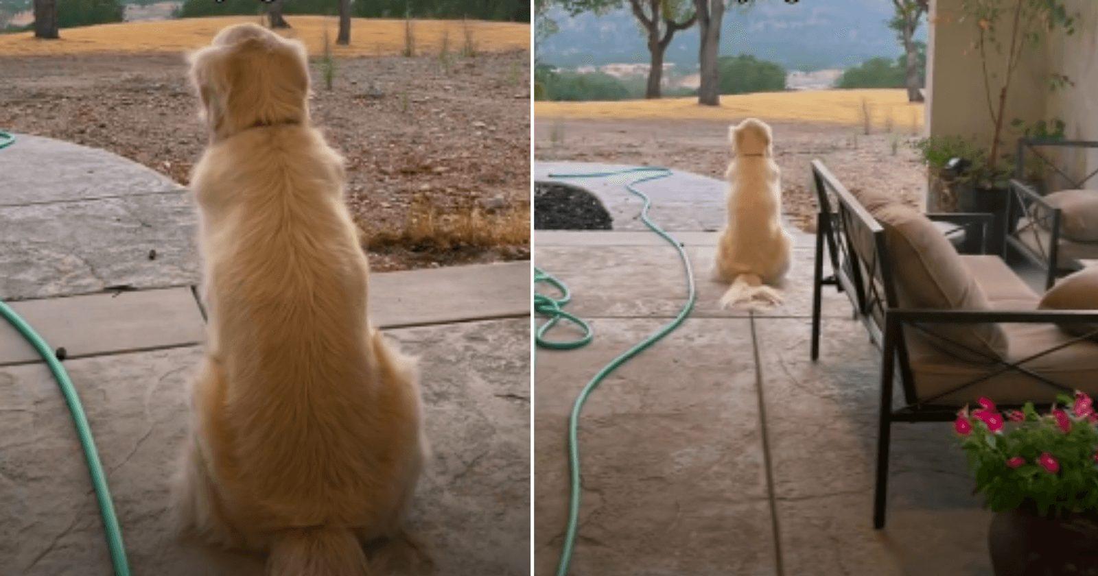 Cachorro se torna viral por ser apaixonado pelo pôr do sol