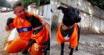 Cachorro acompanha gari em trabalho e se torna funcionário!