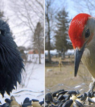 Mulher instala câmera em comedouros e conhece pássaros surreais!