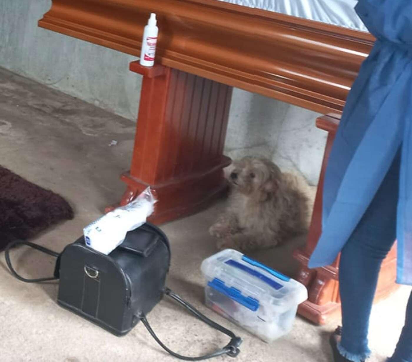 Fiel cachorro fica ao lado da falecida dona em seu funeral