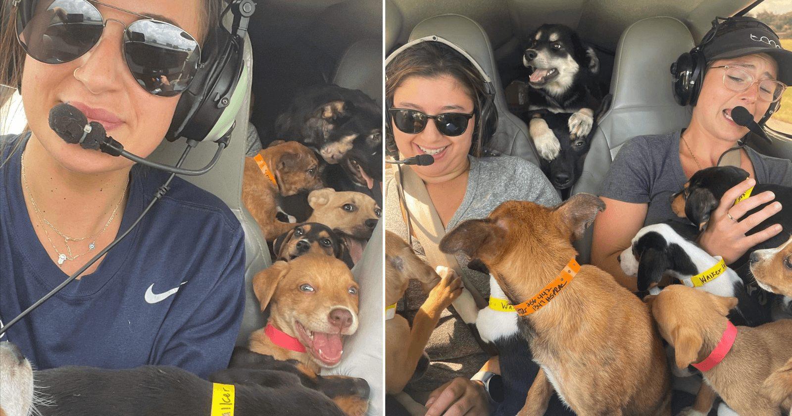 CENA FOFA: Mulheres transportam 27 cachorros em helicóptero